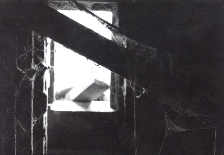 robin white cob webs