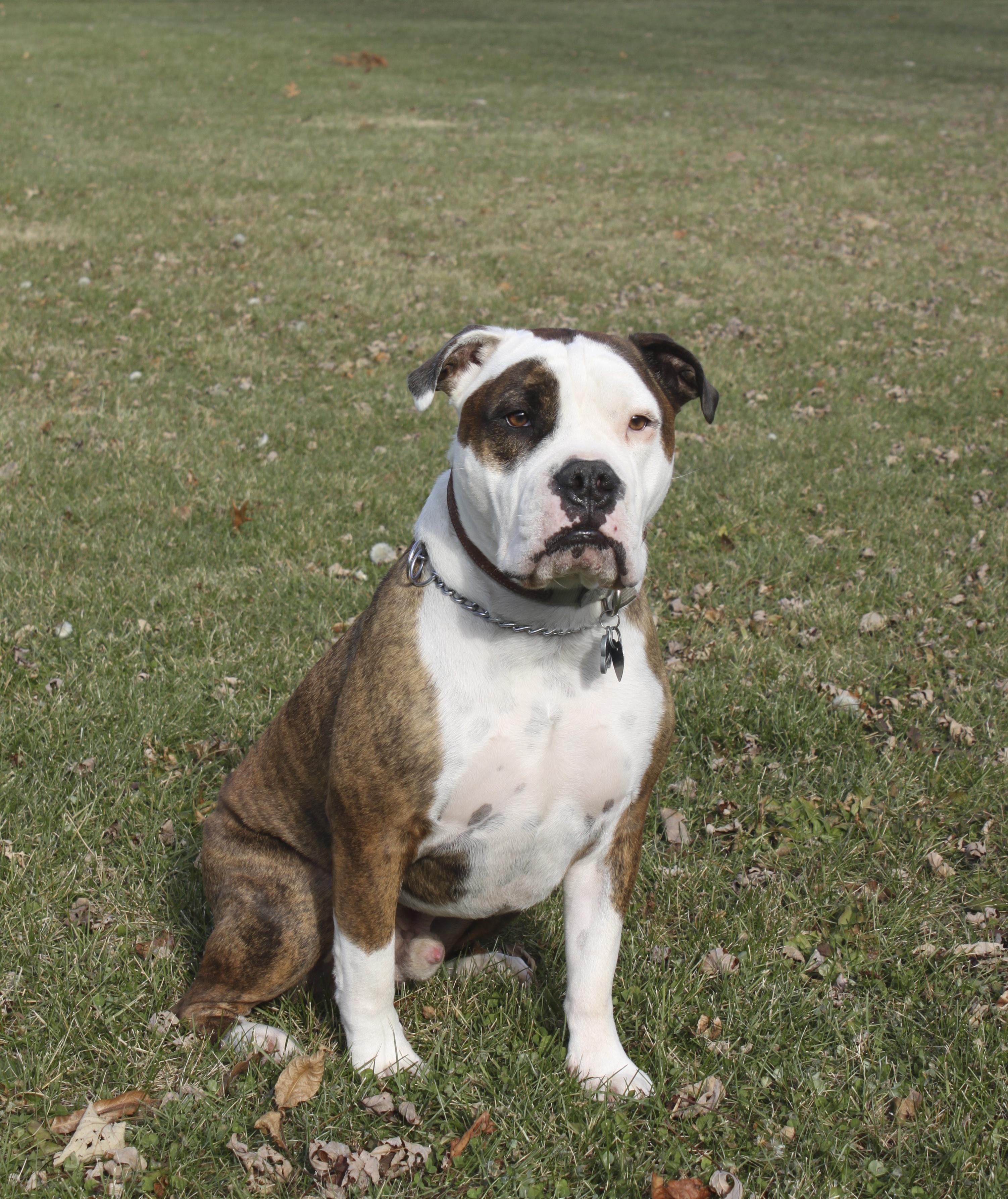 Zoom Zoom Dog Training