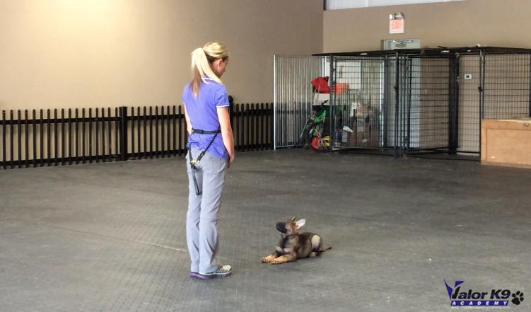 K Dog Training Videos