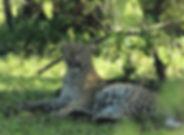 itin-kenya-3.jpg