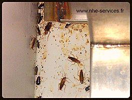 nhe blattes et cafards lyon st etienne m thode durable garantie. Black Bedroom Furniture Sets. Home Design Ideas