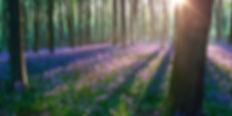 13389-Spring.jpg