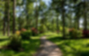 velikobritaniia-westonbirt-arboretum-par