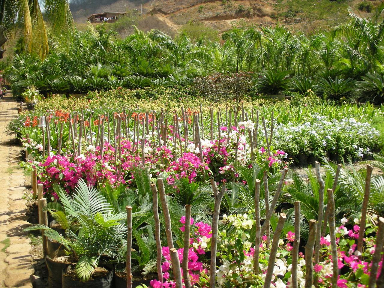 Viveroshuatulco created by viverocuevasanta based for Vivero plantas tropicales
