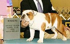 Hogan Knows Best Bulldog