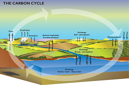 Global warming the carbon cycle steps the carbon cyclecarbon dioxide cycle co2 ccuart Gallery