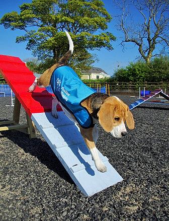 Dog Training Carmarthen Showground