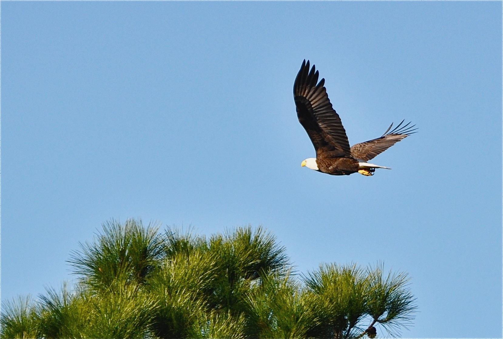 Rivendell Community Osprey Florida