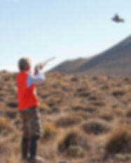 dove hunt_edited.jpg