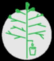 Maple 3 - Processus naturel