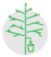 Maple 3 - Naturel Process