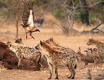 Africa_2019_SLL_-09315.JPG
