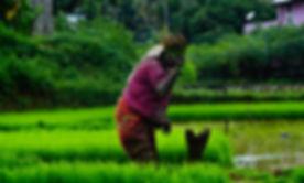 Image by Nandhu Kumar