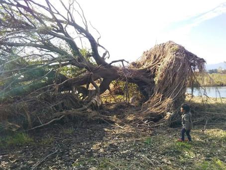 ちびっこ探検隊 台風の驚異!
