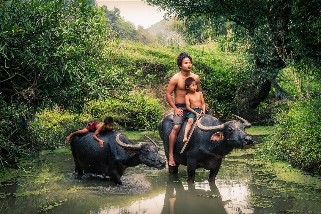 Dorit-Lombroso-boys-water-buffaloes