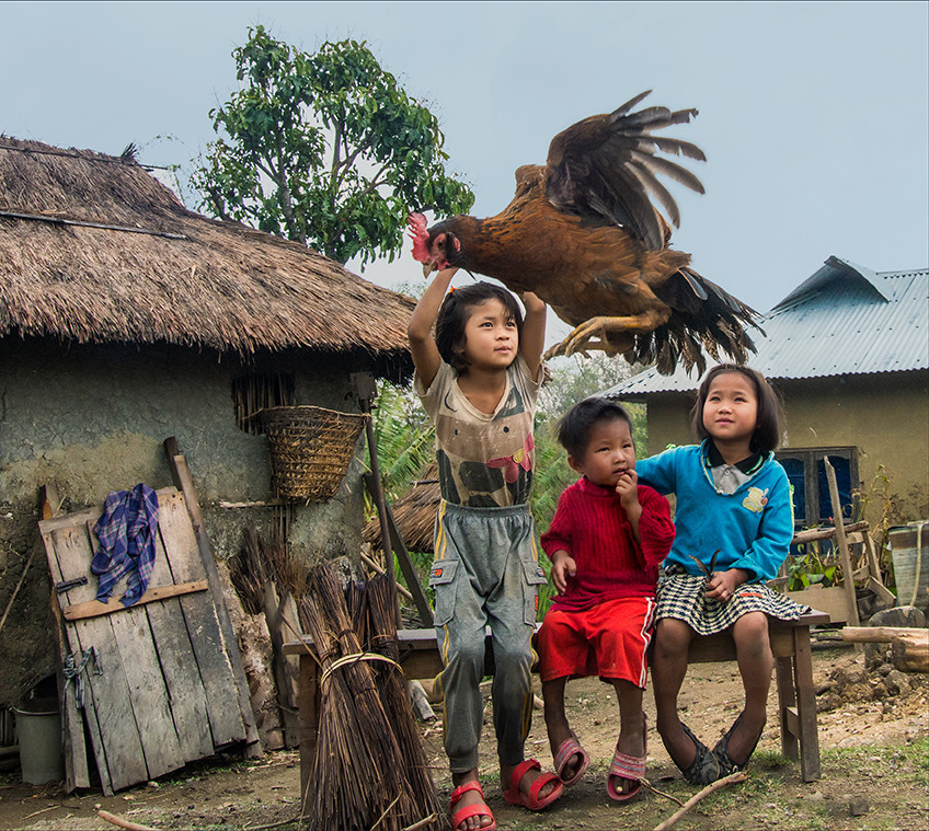 Dorit-Lombroso-kids-with-rooster