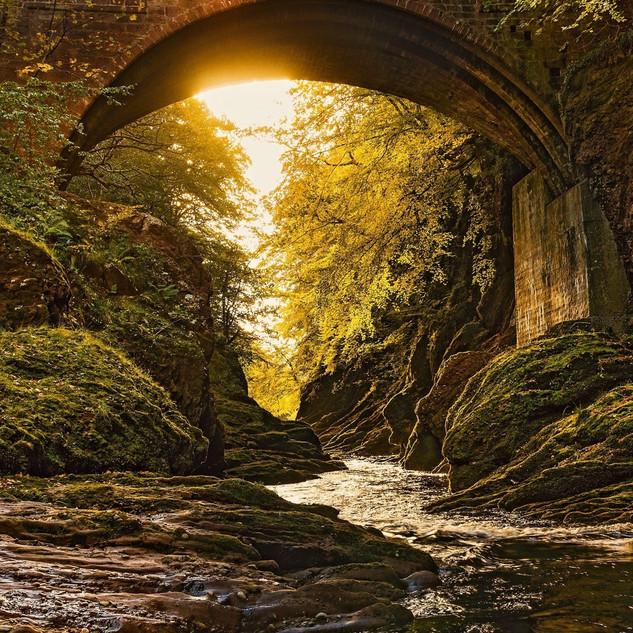 Forest-bridge-river-sunshine-moss_1920x1