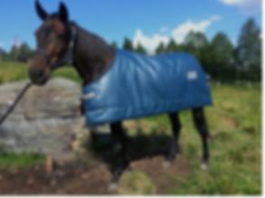 horse coat.png