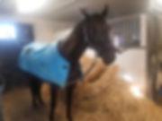 horsevib.jpg