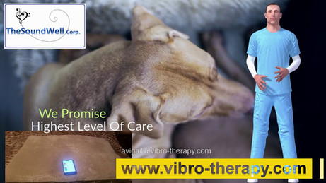 dog's vibroacoustic therapy pillow