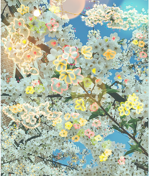 blossoms-01_edited.png