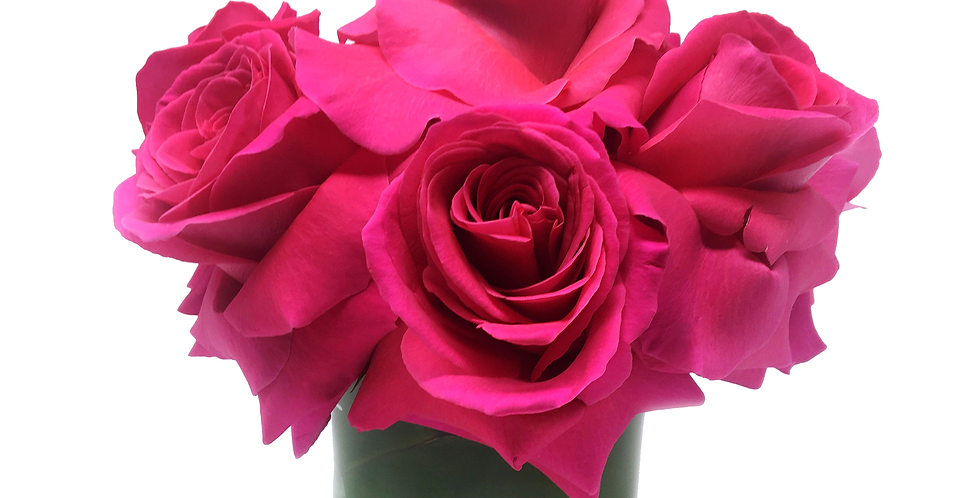 Pink Floyd Reflexed Roses