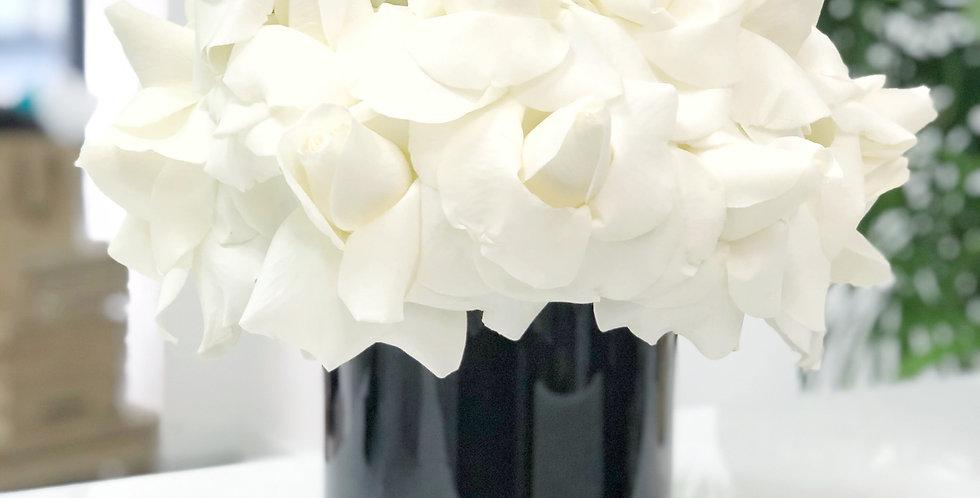 White Reflexed Roses