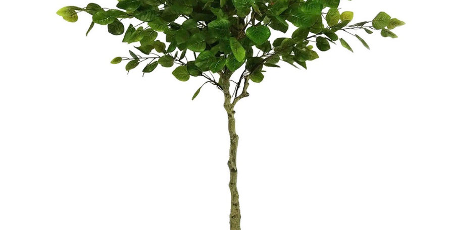 4' Planted Money Tree