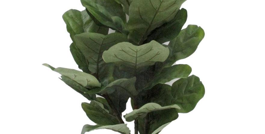 6' Fiddle-Leaf Fig Tree