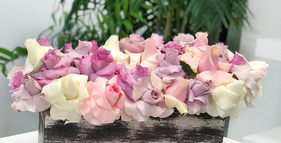 Reflexed Pastel Roses