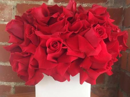 Reflexing Roses!