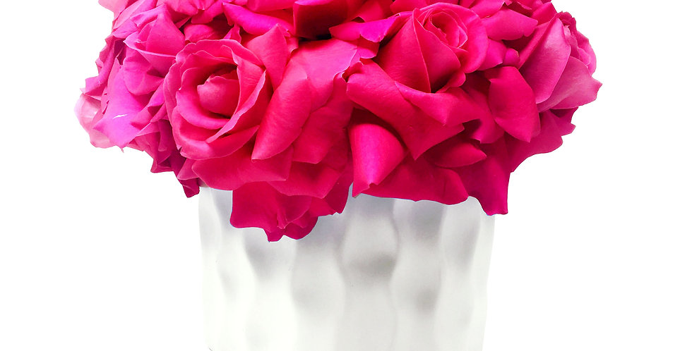Large Pink Floyd Reflexed Roses