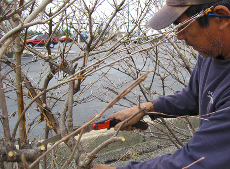 The Benefits of Winter Pruning