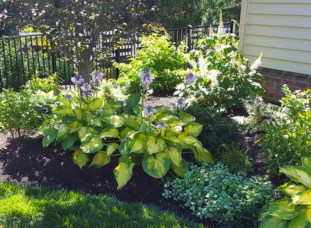 Tip for Fall: Dividing Your Perennials
