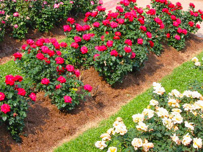 Spring Maintenance Tips to Keep in Mind