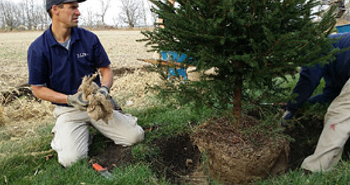 Joel John tree planting