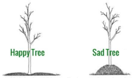 "Mulch ""Volcanos"" Around Trees are Harmful"