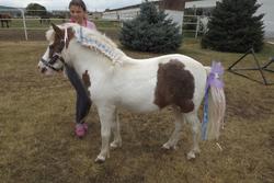 Конкурс красоты на день лошади