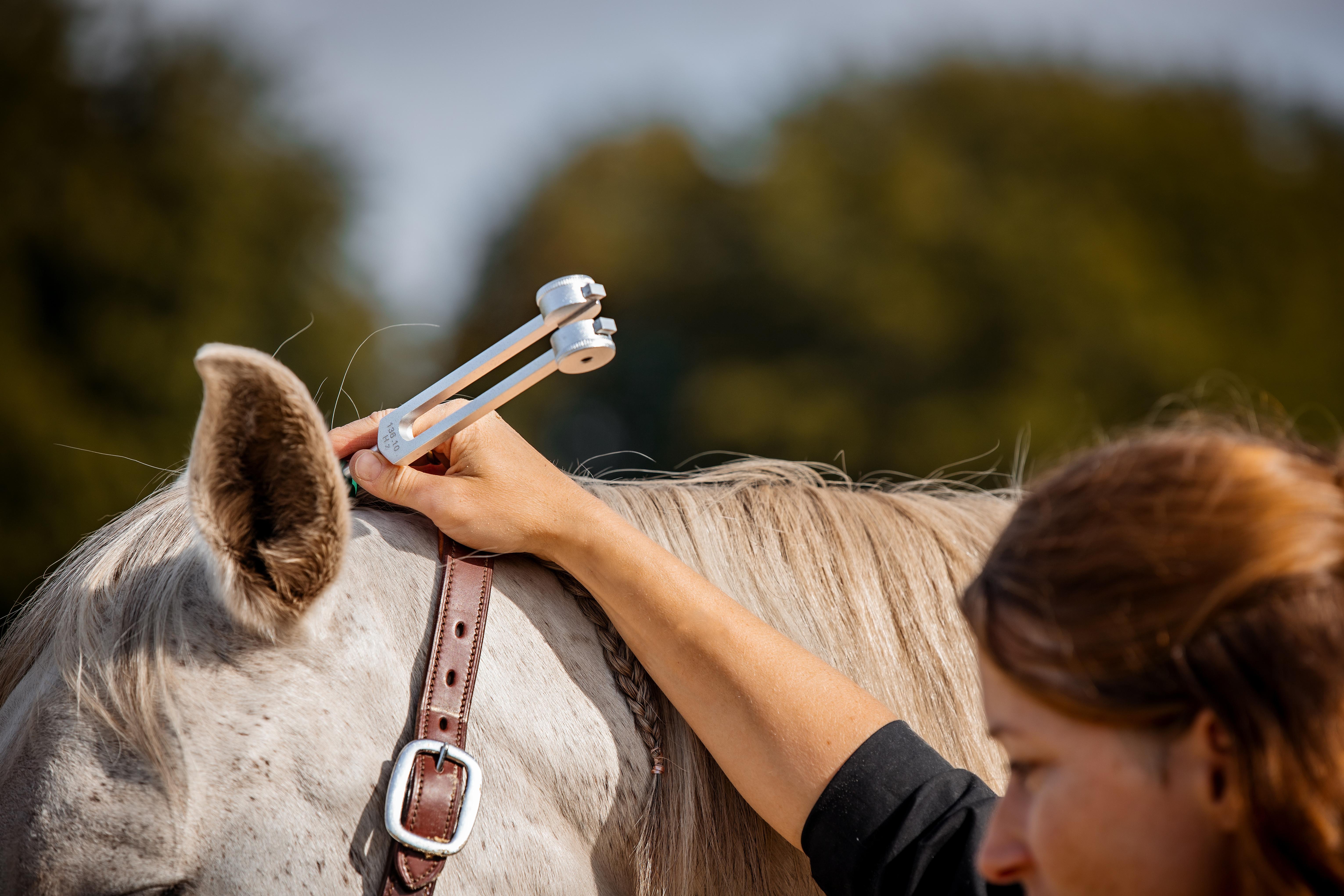 Osteopathische Körperarbeit für Pferde