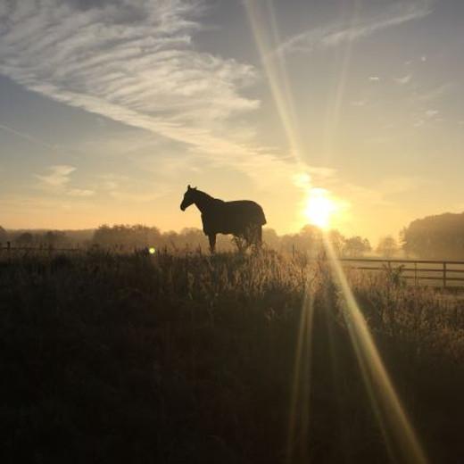 Meditation mit Pferden