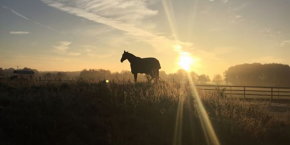Pferdemeditation