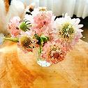 あまりにも可愛くてパチリ📷ピンクのスカビオサ。ピンクは愛情や幸せの象徴の色。_