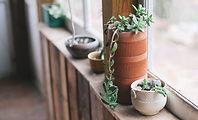 ウィンドウの植物