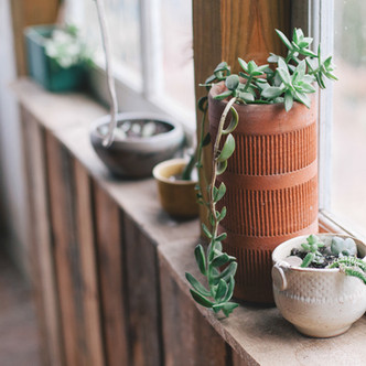 Home Decor Ideas : How To Have Happy Houseplants