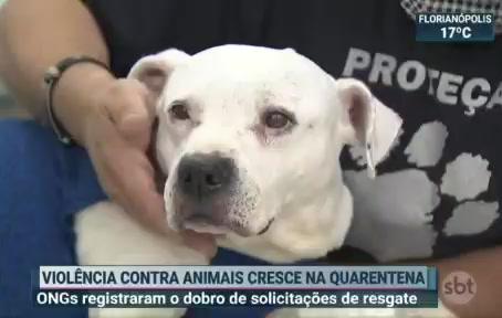 Reportagem no SBT sobre crescimento de violência contra animais