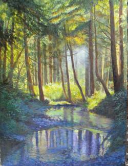 Cummins Creek Santuary