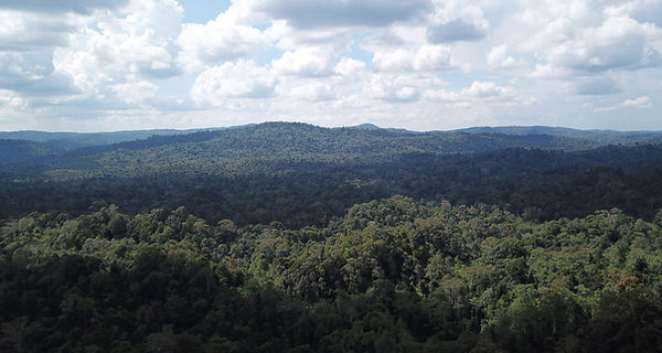 primaryforest.jpg