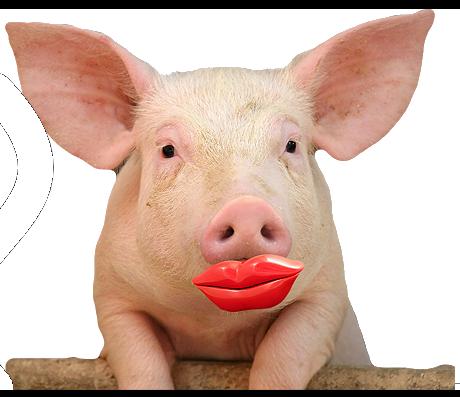 piggy w_lips
