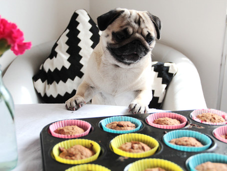 A Pupcakes Recipe for your Furry Friend