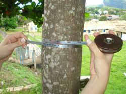 Medição com fita dendrométrica